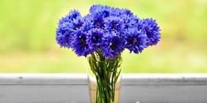 Во сне видеть негра сонник цветкова